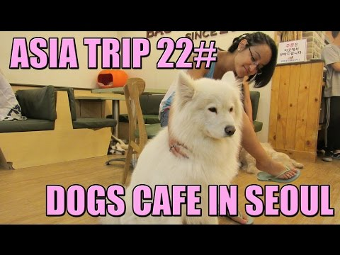 Asia Trip 22# Korea, Bau House Dogs Cafe at Hongdae, Seoul חופשה בקוריאה בית קפה כלבים