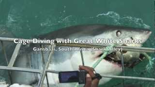 Cage Diving with Great White Sharks in Shark Alley (Gansbaai, South Africa)