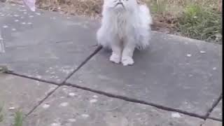 Weird stray cat outside