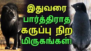 இதுவரை பார்த்திராத கருப்பு நிற மிருகங்கள் | Tamil Facts | Latest News | World Seithigal