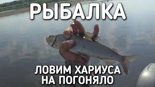 ЛОВИМ ХАРИУСА НА ПОГОНЯЛО / РЫБАЛКА / АВГУСТ 2017 / БРАТЬЯ ПРИХОДЬКО