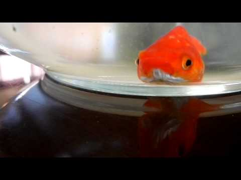 Fred fish for Fred the fish
