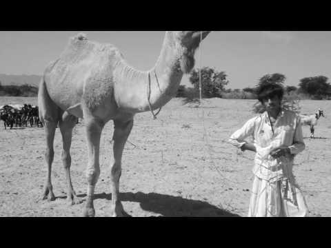 Rabari Nomads Kutch Gujarat India