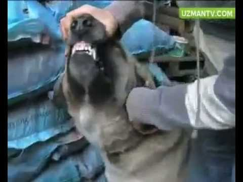 Kuduz Olan Hayvan Nasıl Anlaşılır ?