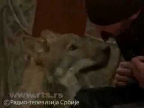 Serbian orthodox monk and a wolf( Монах и вук )