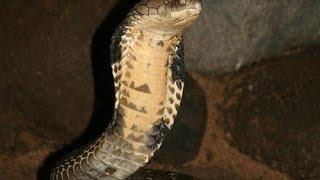 Bí ẩn hang rắn ở chùa Hang Châu Đốc