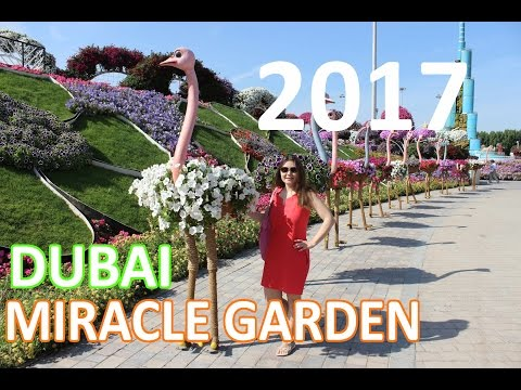 Парк цветов в Дубае: Miracle garden Dubai 2017
