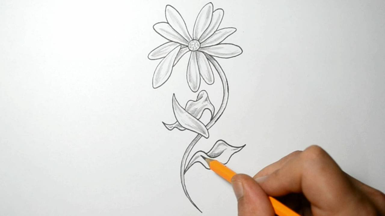 Flower Petals Line Drawing : Drawing a daisy with falling petals youtube