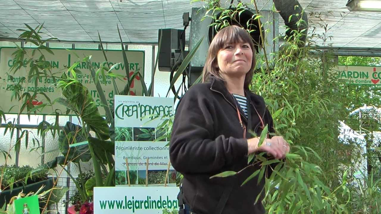 Tout savoir sur le bambou youtube - Tout sur le bambou ...
