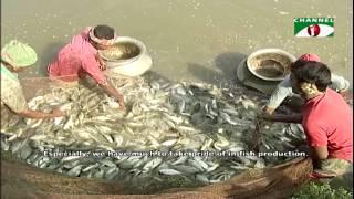 Entrepreneur brings success exporting the natural fish hormones