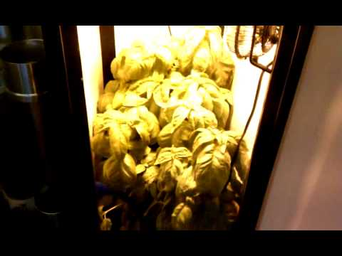 Grow Box   SuperCloset Hydroponic Box Week 3
