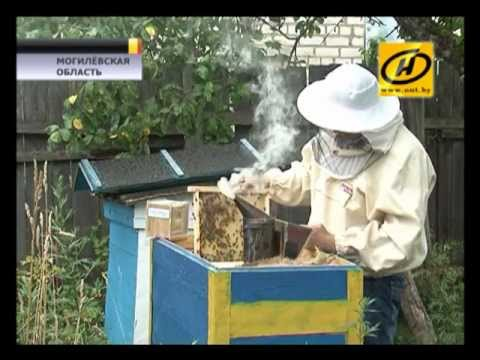 Укус пчелы: вред или укрепление здоровья?
