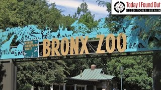 Why is there an Area of New York Called the Bronx?