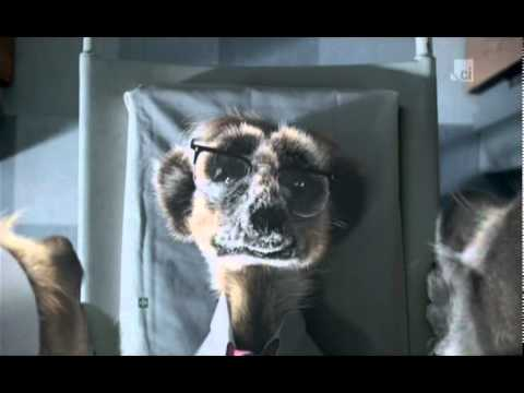 Compare The Meerkat - Commercial 18 ( The Hospital ) - YouTube