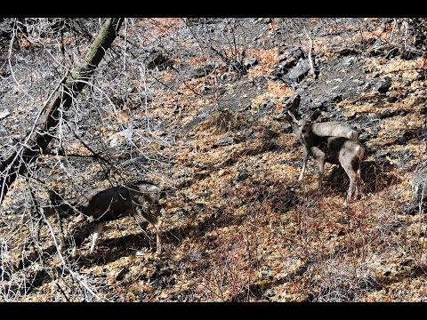 Afternoon trip to Tibble Fork near Lehi, Utah  Produced by Erick F Dircks