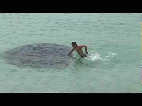 Mysterious Water Creature - Florida - 2013 Music Videos