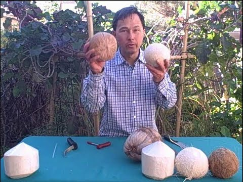 How to Open a Young, White or Brown Coconut and Which is Best?