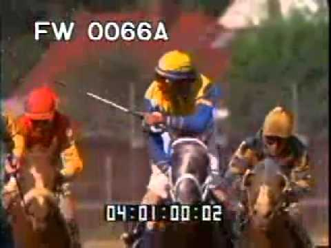 Horse Race Finish Line - Horse Derby - Racing Horses - Best Shot Footage - Stock Footage