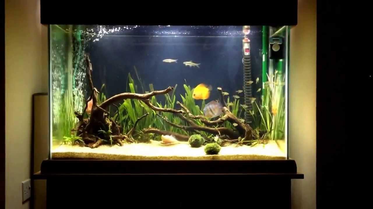 Как красиво оформить аквариум на 100 литров своими руками 16
