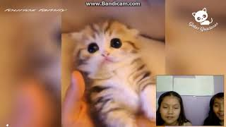 Reacting to funny cats