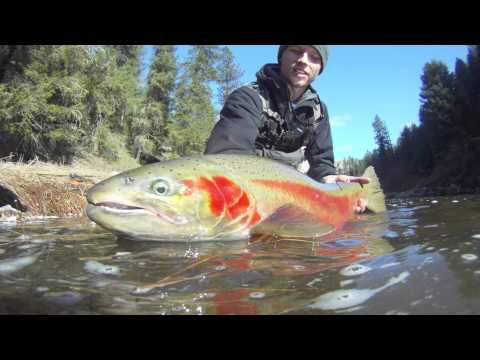 Clearwater Steelhead fishing