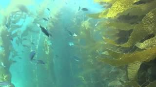 Diving Cherry Cove -- Santa Catalina Island