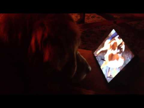 Caught The Dog Watching Porn. video