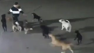 LiveLeak - Woman killed after being attacked by 11 dogs