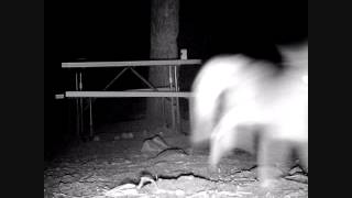 BIGFOOT RESEARCH 2 OCT 2013 GAME CAMERA RESULTS