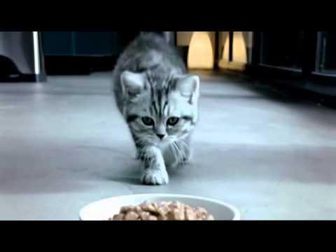 Whiskas 'Kitten' TV Commercial