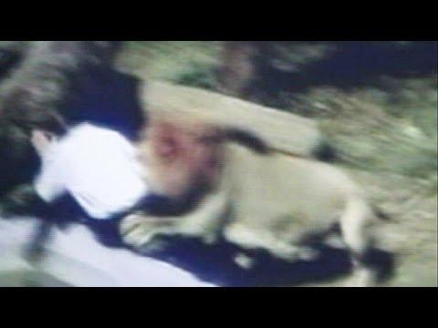 Азербайджанец спас ребенка из пасти льва в Украине. Рагиф Касимов, Азербайджанец, Украина, Киев.