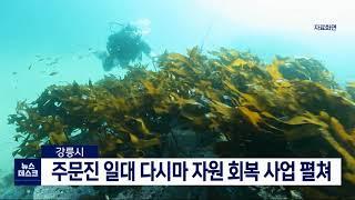 투/강릉시, 다시마 자원 회복 사업 펼쳐