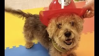 LIVE: Rescue This Adoptable Dog in New York City Today - FRANKIE | The Dodo + Clear The Shelters