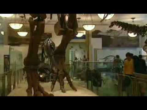 Extreme Dinosaurs - The Giants of Patagonia - Part 5