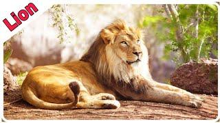 Animal Names For Children To Learn | Lion,Elephant,Zebra For Kids