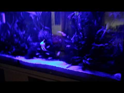 Aquarium thunderstorm with new TMC V2 Ilumenair