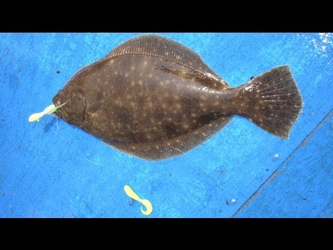 How to Tie and Fish a Flounder Bucktail Rig