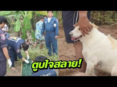 สุนัขเฝ้า ร่างเจ้าของเสียชีวิตนาน 3 วัน | 13-11-60  | เช้าข่าวชัดโซเชียล