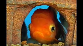 Counting the CUTEST FISH in the WORLD (1-10) Babies, Toddlers, Preschool