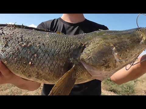 Рыбалка на Капчагае! Летний турнир по ловле змееголова! Сообщество Охотники КЗ