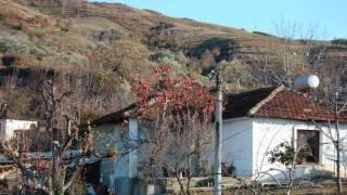 Këngë labe-Te bajamia në avlli-Tepelena