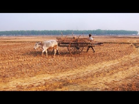 Agriculture and Santhal Community