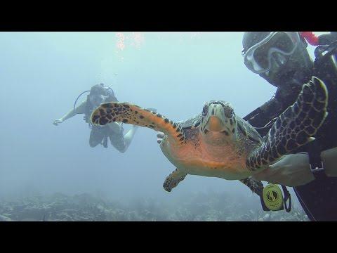 Diving Barbados Summer 2015