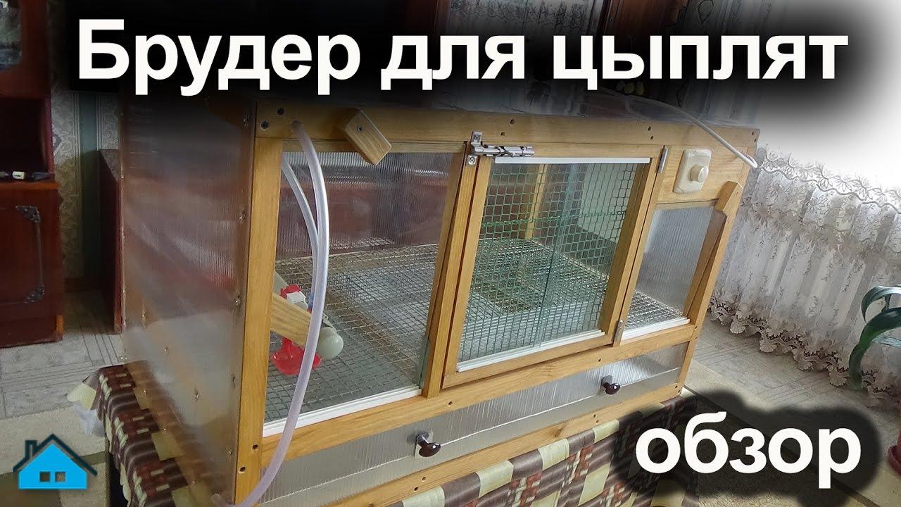 Цыплята брудер своими руками 18