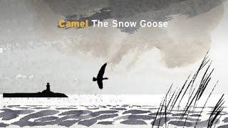 Watch Camel Sanctuary video