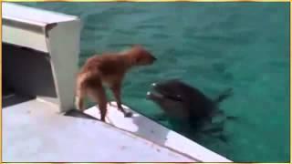Cá heo cứu chó thoát khỏi cá mập