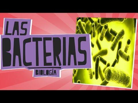 Las Bacterias - Biología - Educatina