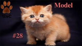 КОТЫ 2019 ПРИКОЛЫ с котами и кошками 2019 Funny Cats #28