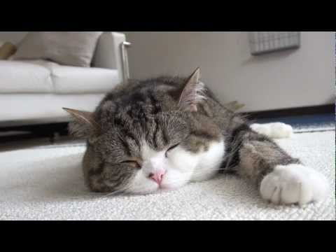 -Sleeping Maru.-
