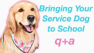 Service Dog at School: Q+A
